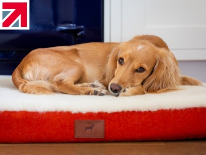 The Quest for the Perfect Dog Bed